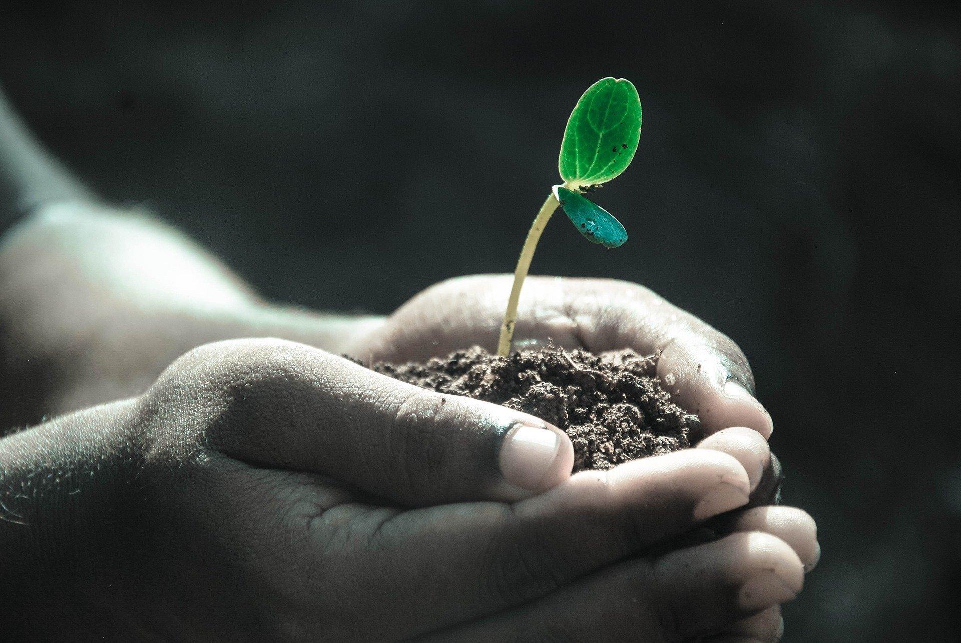 نیاز نوری گیاهان