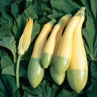 بذر کدو خورشتی دورنگ