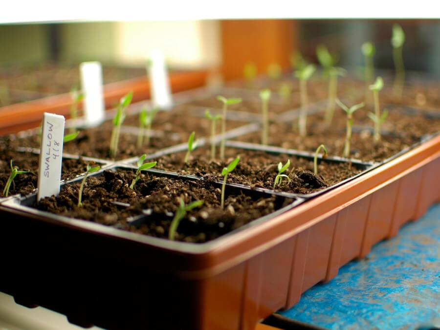 کاشت بذرها