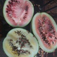 بذر هندوانه آجیلی محبوبی