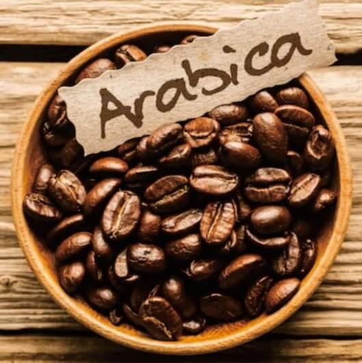 نهال قهوه عربیکا