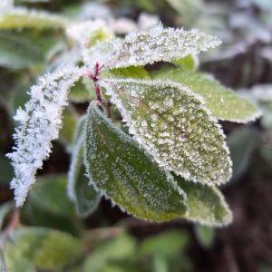 سرمازدگی