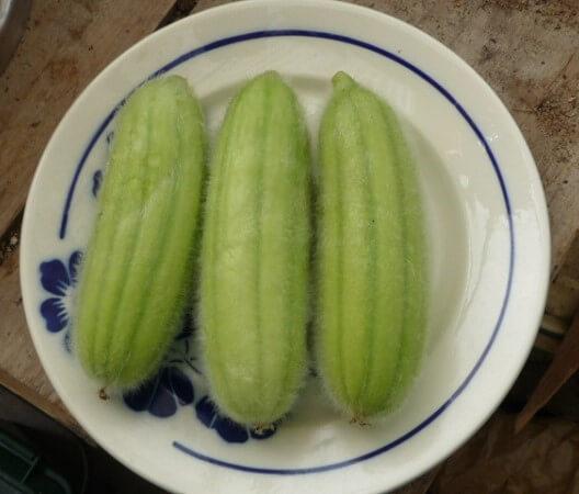 بذر خیار ایتالیایی