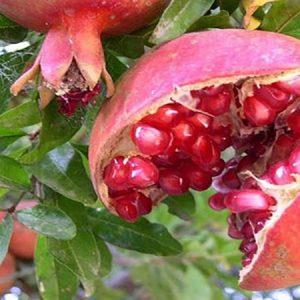 عارضه ترکیدگی میوه انار
