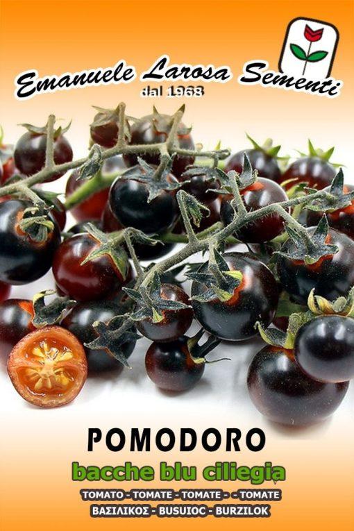 بذر گوجه بلوبری