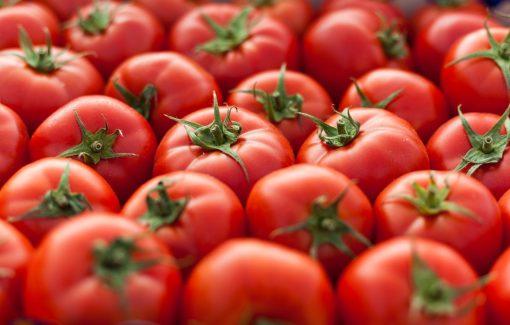 بذر گوجه فرنگی تریکو