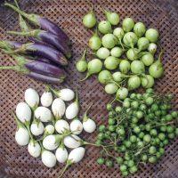 بذر بادمجان بیبی ترشی