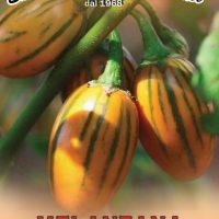 بذر بادمجان ترشی توگا