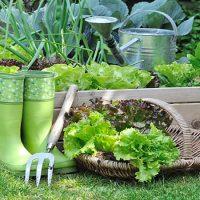 مراقبت از سبزی ها
