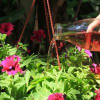 کوددهی گیاهان گلدانی