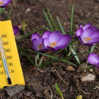 دمای خاک