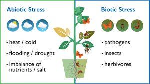 استرس در گیاهان