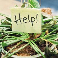 ریزش برگ گیاهان آپارتمانی