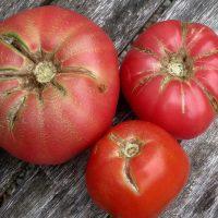 ترک خوردن گوجه فرنگی