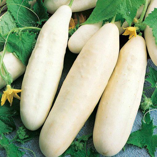 بذرخیار خاردار سفید